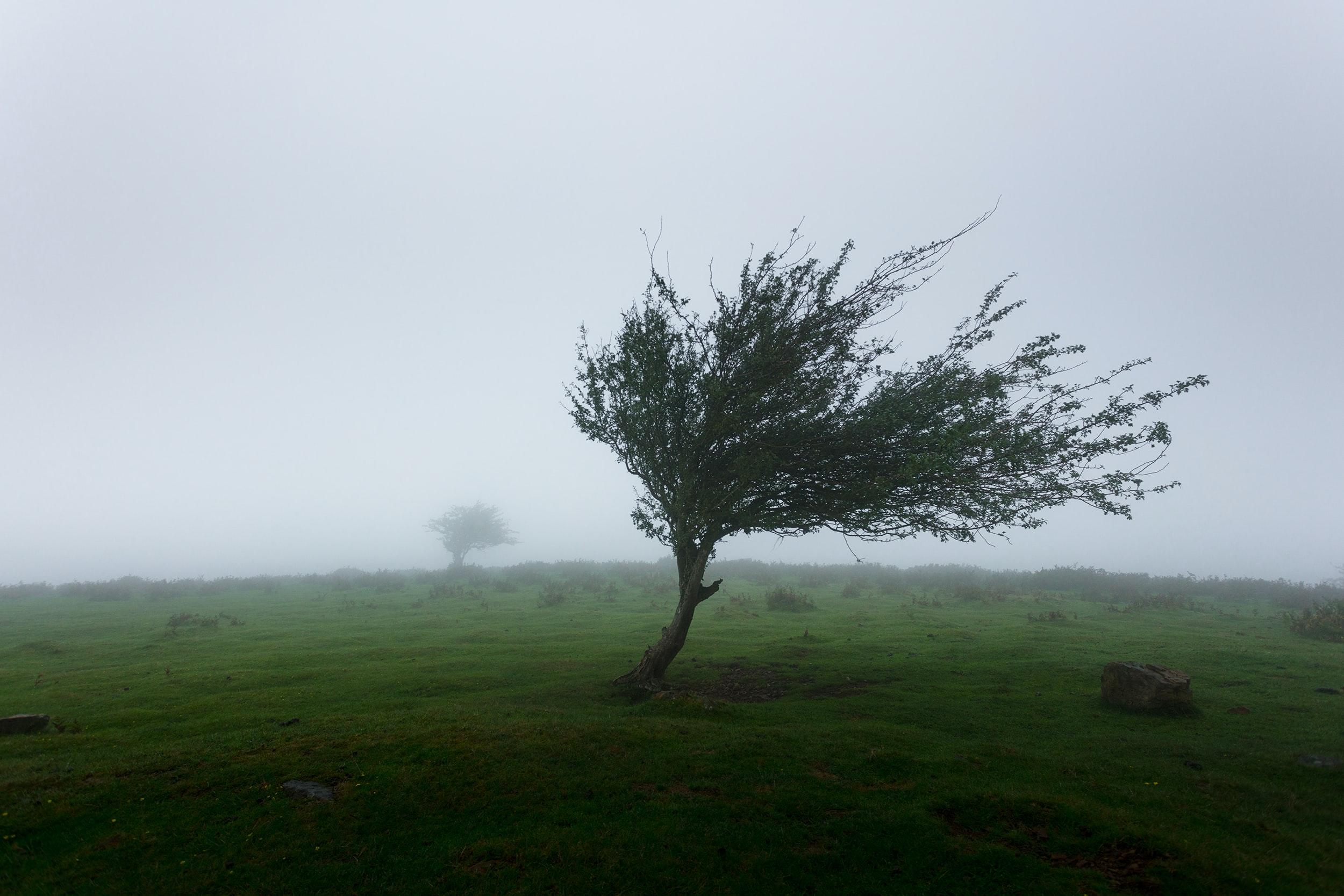 Une année de mesure des vents…